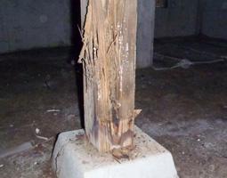 白蟻による束柱の被害