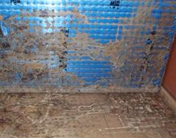 白蟻による畳の被害